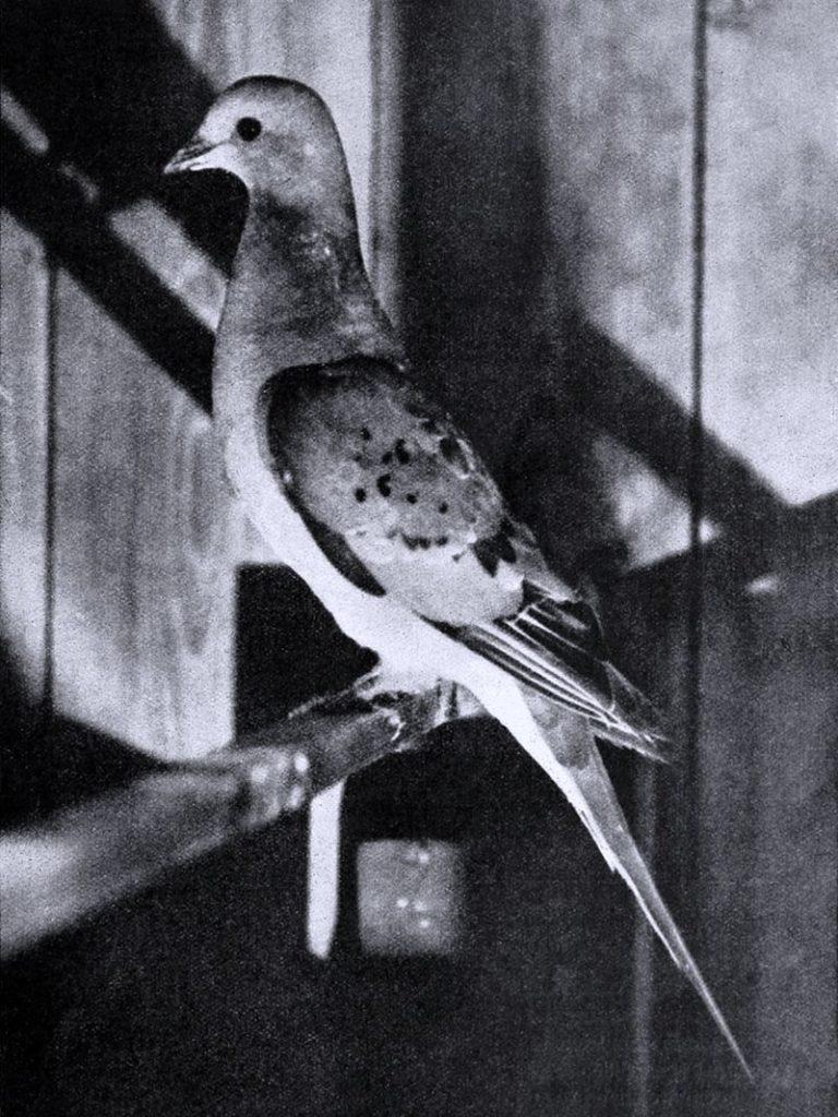 Bird_lore_(1913)_(14562557107)