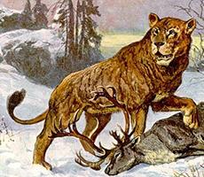 lion des cavernes