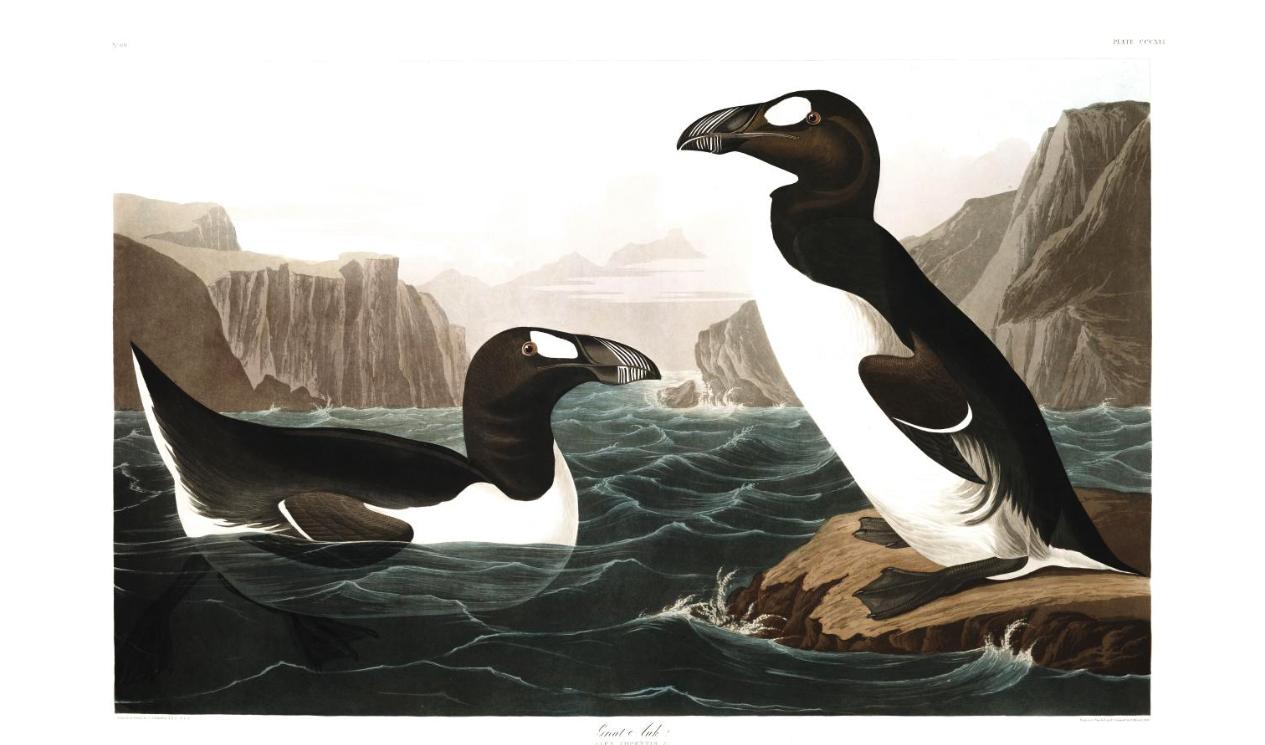 greatauk-audubon