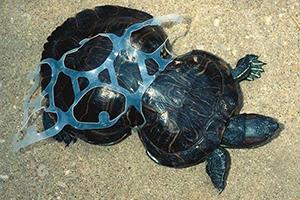 Animaux marins victimes du plastique