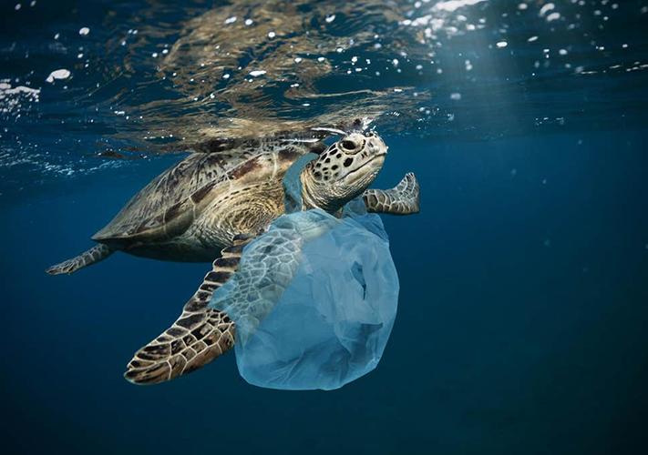 tortue victime du plastique